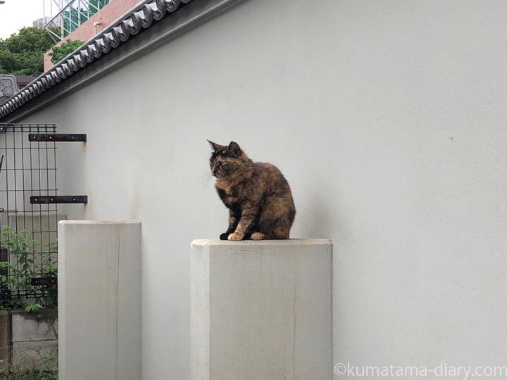 我関せずのサビ猫さん