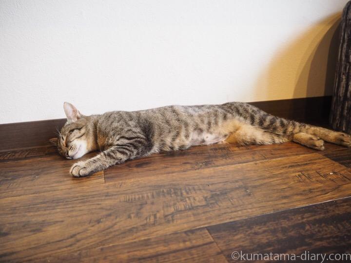 床で寝そべるキジトラ猫さん
