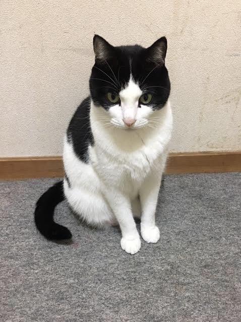 白黒猫エースくん