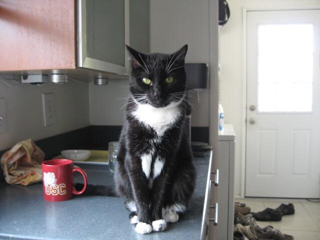 黒白猫おネコさん