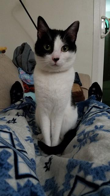 白黒猫トメオくん
