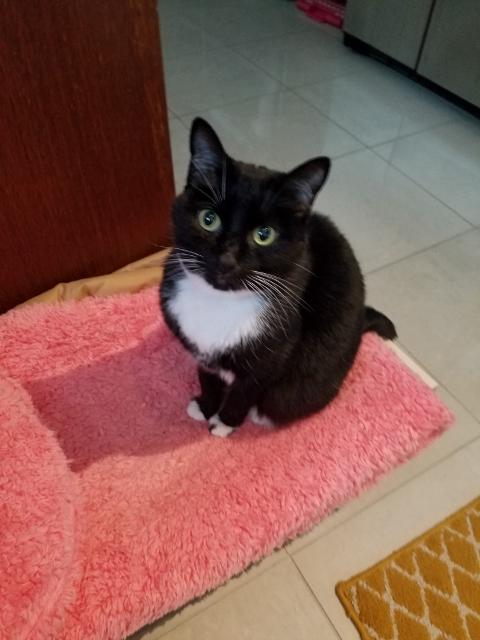黒白猫おネコちゃん