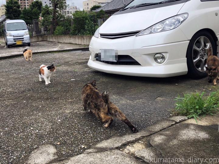 駐車場の猫さんたち2