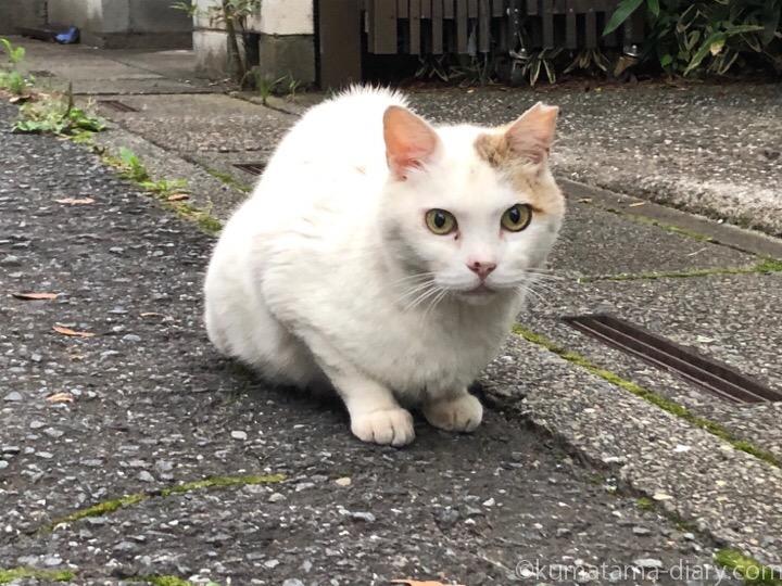 入間市猫さん