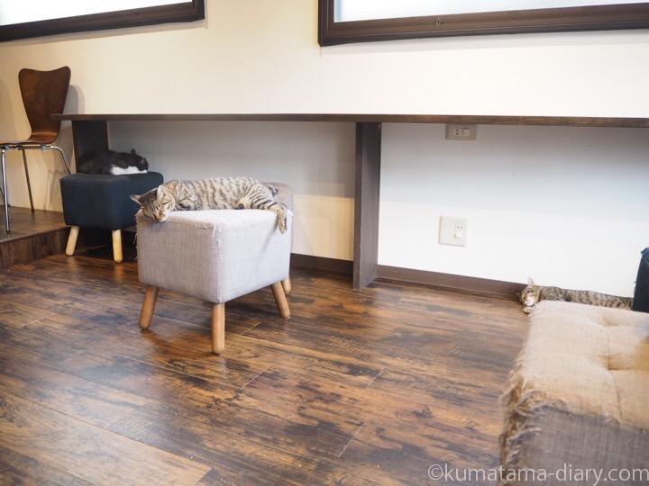 宿木カフェの猫さんたち