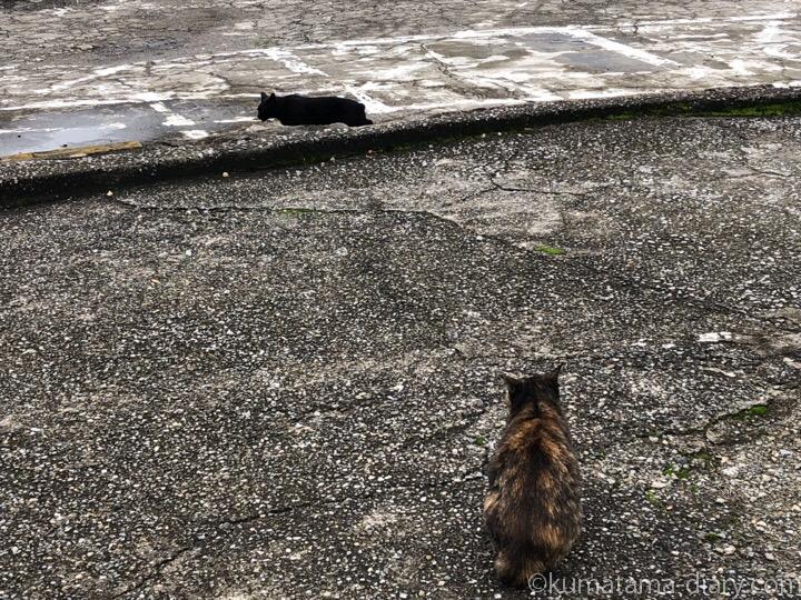 駐車場の猫さんたち6