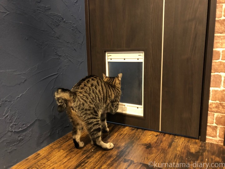 猫用ドアをくぐるキジトラ猫さん