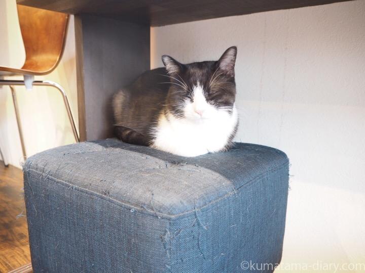 宿木カフェ黒白猫さん