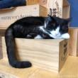 ワイン箱の上で眠る黒白猫さん
