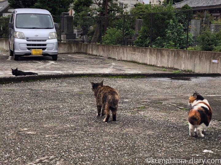 駐車場の猫さんたち5