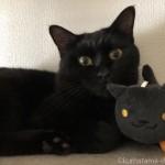 ねこあつめ「かばんに付けられるでっかいぬいぐるみ」のくろねこさんと黒猫