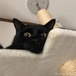 須崎動物病院の「マジカルシャン」でキャットタワーの汚れを落としました