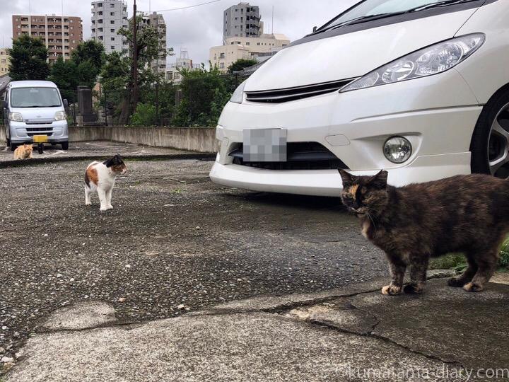 駐車場の猫さんたち1