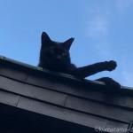 「黒猫感謝の日」に屋根の上でくつろぐ黒猫さん