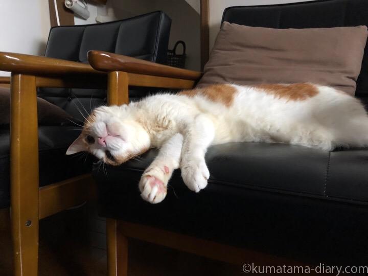 寝転ぶたまき