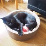 「ガリガリサークルスクラッチャー」に再び入るようになった黒猫