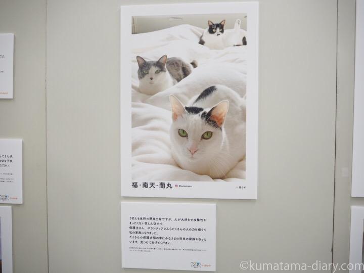 sippo 写真展 猫ラボさん