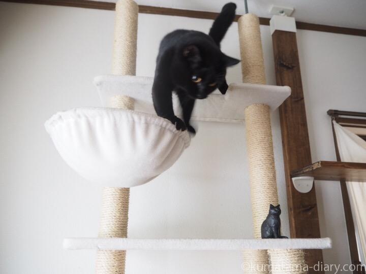 キャットタワーふみおと木彫り猫
