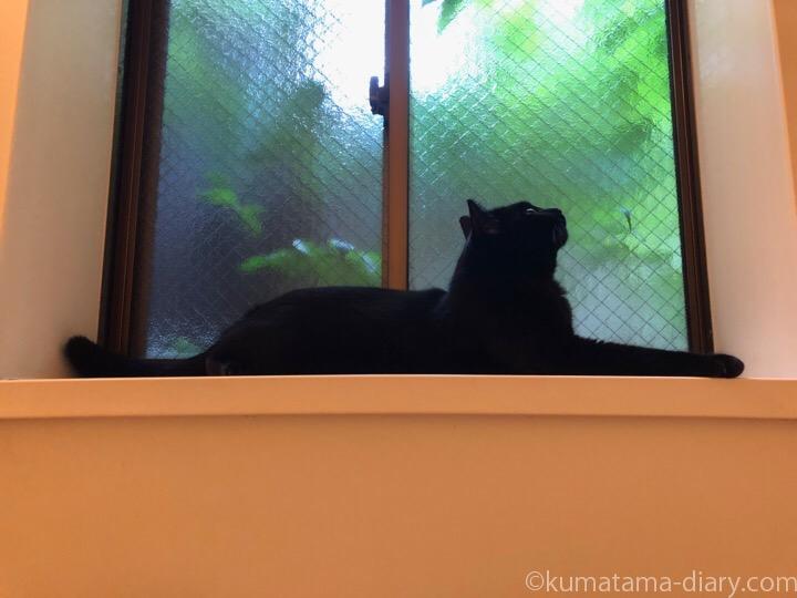 風呂場の窓台に乗るふみお