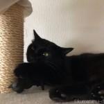 木彫りの黒猫に噛みつく黒猫