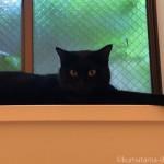 風呂場の窓台でくつろぐ黒猫