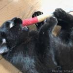 猫の家の「にっぷ棒」で遊ぶ黒猫