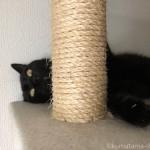 キャットタワーで仰向けに寝る黒猫