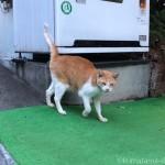 自動販売機の土台にスリスリする青山の茶トラ白猫さん
