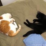 同じポーズで向かい合って眠る猫たち