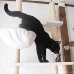 木彫りの黒猫が気になる黒猫