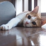 部屋の隅っこで伸びる猫
