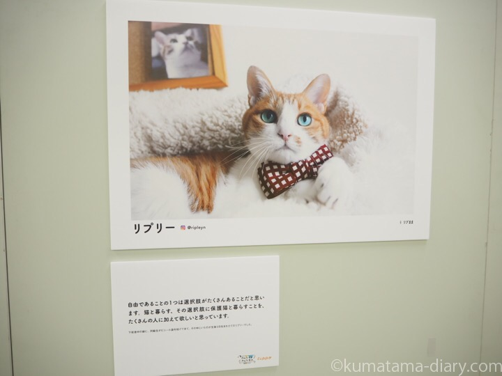 sippo 写真展