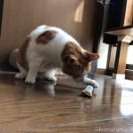 猫の家の「にっぷ棒」で遊ぶ猫