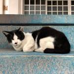 【文京区】折り曲げた前足がかわいい黒白猫さん