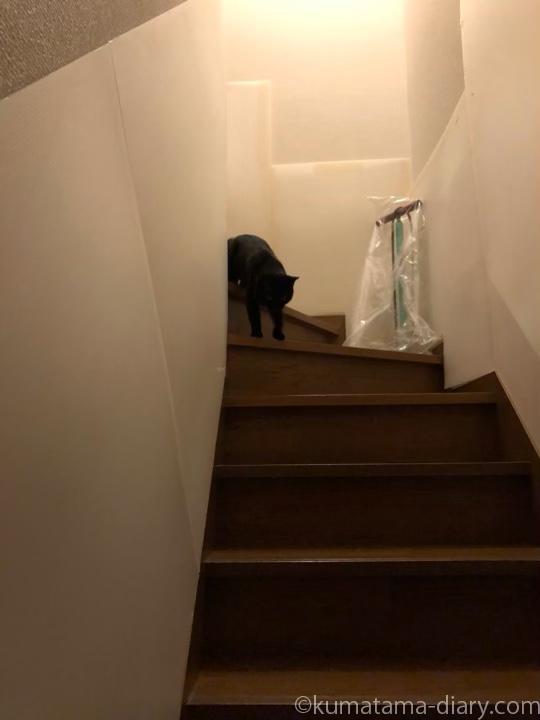 階段を降りるふみお