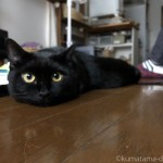 寝ていれば彼の近くでも平気な猫