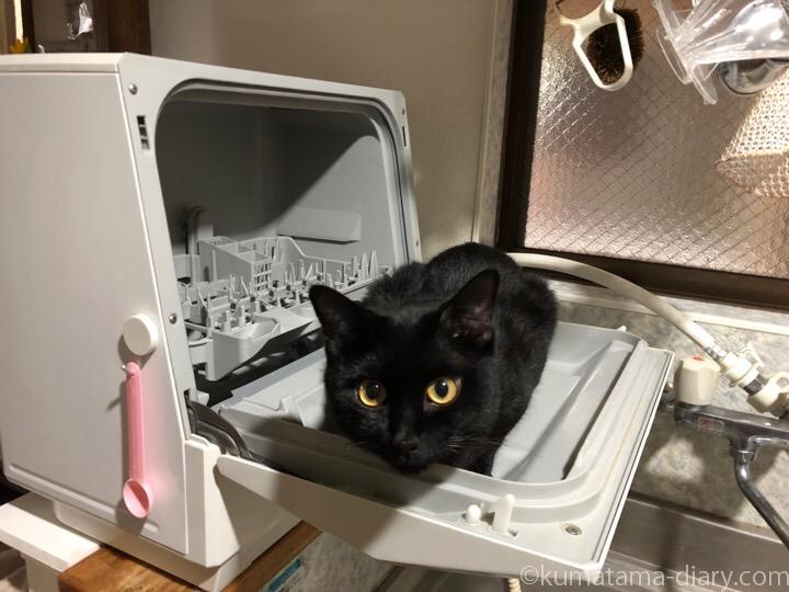 食洗機の扉に乗るふみお