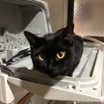 Panasonicの食洗機「プチ食洗」の扉に乗る猫