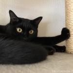 キャットタワーの柱で前足を突っ張る猫
