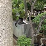 涼しい場所を知っている「白山神社」の猫さんたち