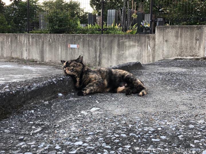 あごのせサビ猫さん