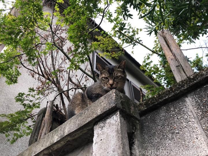 塀の上の猫さん