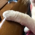 カリモク60のKチェアのアームに前足を乗せる猫