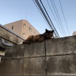ブロック塀の上のサビ猫さん