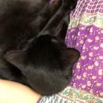 寝る前のベッドの上の猫たち