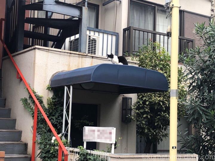 屋根の上の黒白猫さん