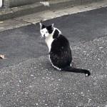 個性的な柄がかわいい黒白猫さん