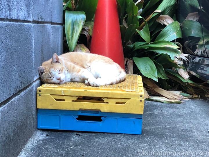 眠る茶トラ白猫さん