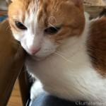 カリモク60のKチェアの唯一の欠点 ※猫を飼っている人限定※
