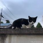 カラスに動じない猫さん